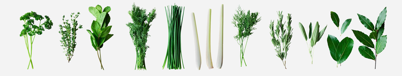 Image of garden herbs