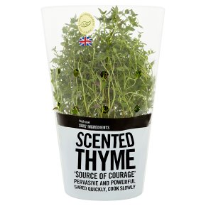 Cooks' Ingredients thyme potted
