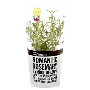 Cooks' Ingredients rosemary pot