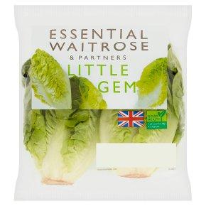 Essential Little Gem Lettuce