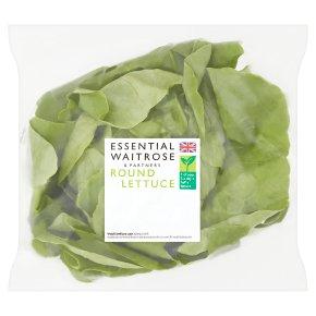 Essential Round Lettuce