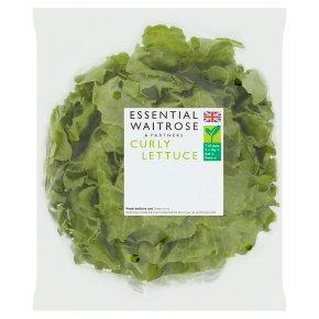 Essential Curly Lettuce