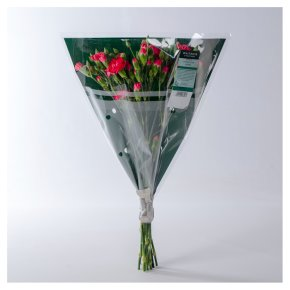 Waitrose Foundation Spray Carnations Mix