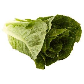 Waitrose Loose Romaine Lettuce