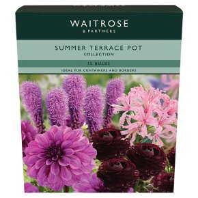 Waitrose Summer Terrace Pot Collection Bulbs