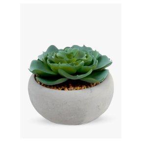 John Lewis Succulent In Round Cement Pot