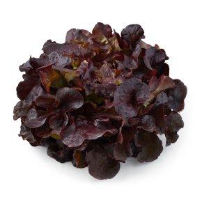 Natoora French Red Oakleaf Lettuce