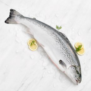 Large Fresh Whole Scottish Salmon