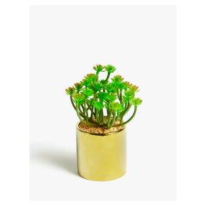John Lewis Branched Succulent