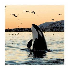 Big Orca Sunset Blank Card