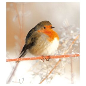 Robin Bird On Branch 5pk