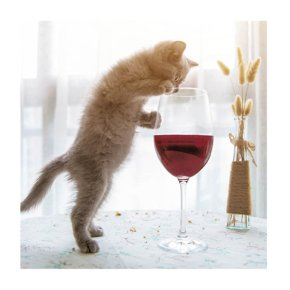 Cats and Wine Card